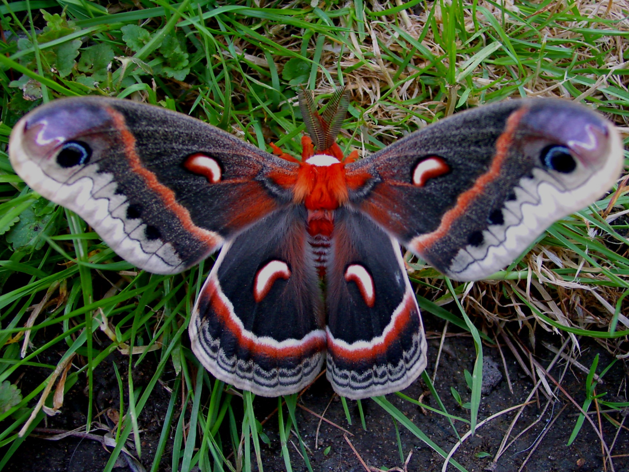 moth poetry Famous moths poems by famous poets these are examples of famous moths poems written by well-known modern and classical poets poetrysoup is a great educational poetry resource of famous moths poems.